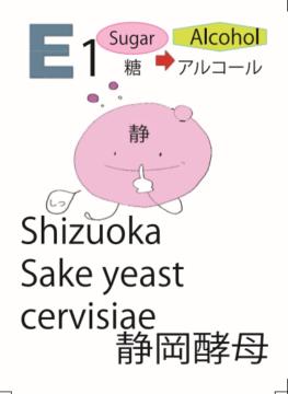発酵ソムリエ、静岡酵母、酒の発酵、