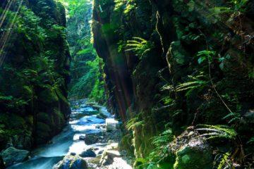 里山という財産。今そこにある自然で稼ぐ!の画像